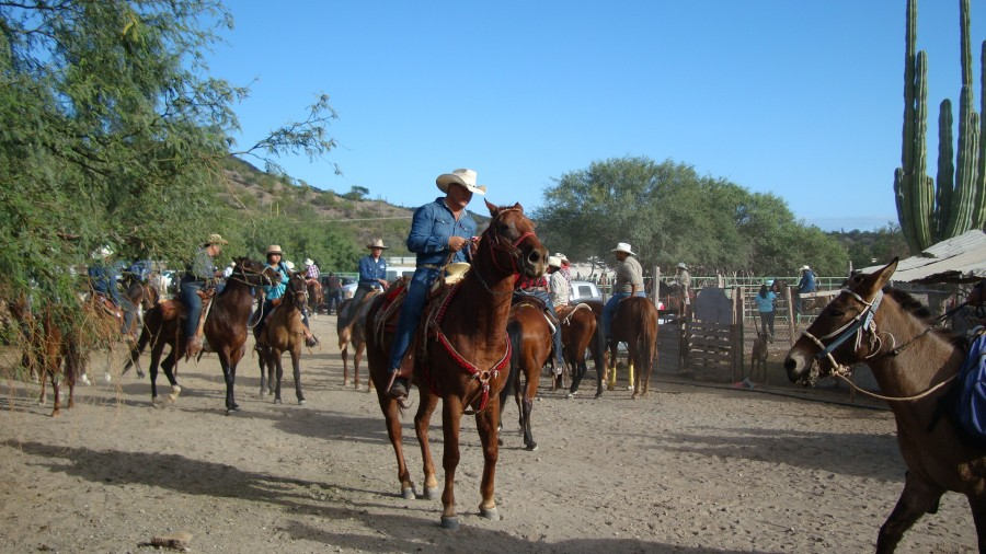 Horseback Riding in San Javier